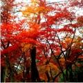 Autumun_Color4.jpg